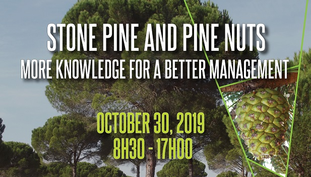 Stone Pine and Pine Nuts.<br /> Seminars' Cycle: From Research to Practice