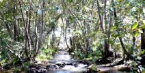 Florestas ripárias como sumidouros de carbono